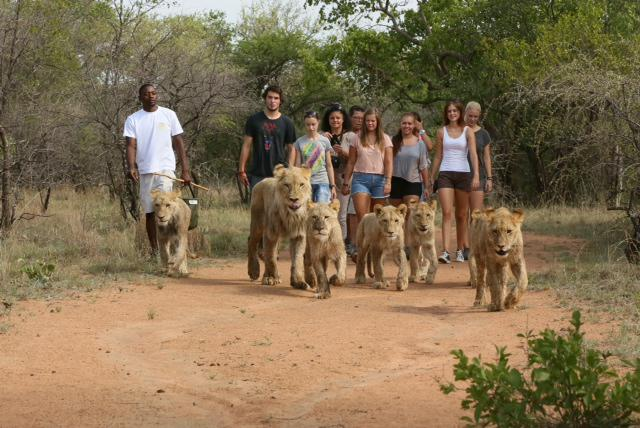 ukutula-lion-park-and-lodge--interaction-tour